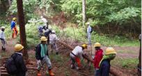 照片:在网谷市开展植树活动